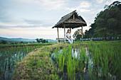 Frau sitzt in der Hütte am Reisfeld, Bali, Indonesien