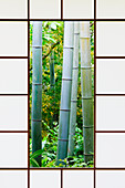 Bamboo Forest Through a Rice Paper Window,Kyoto, Japan