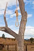 Henkerschlinge in einem Baum, Entrada, Colorado, USA