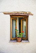 Open Window and Potted Plant