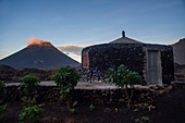 Cape Verde, Island Fogo, NationalPark Fogo, Village Cha,landscape, Active Vulcano, Lavafields, coffee, wineyards, wine