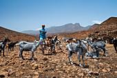 Cape Verde, Island Santo Antao, landscapes, mountains, goats, herding