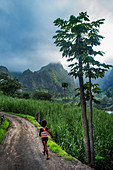 Cape Verde, Island Santo Antao, landscapes, mountains, green valley,papayatree