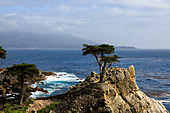 The lone cypress, Monterey, California