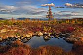 Ein sonniger Tag in der Tundra, Oblast Magadan, Sibirien, Russland