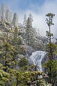 Weihrauchzeder (Calocedrus decurrens) Bäume und Wasserfall, Cascade Creek, Yosemite Nationalpark, Kalifornien