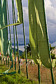 Prayer flags in front of the Pema Choling Nunnery, Tang Valley, Bumthang, Bhutan, Himalayas, Asia