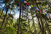 Prayer flags in the forest on the ascent to Taktshang Monastery or Taktsang or Tigernest, a Buddhist monastery in the Parotal, Bhutan, Himalayas, Asia