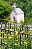 Die Pflanze Goldgarbe in einem Garten mit Kapelle im Hintergrund, Radein, Südtirol, Alto Adige, Italien