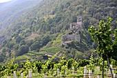 Ruin Hinterhaus near Spitz on the Danube in the Wachau, Lower Austria, Austria