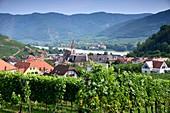 near Spitz on the Danube in the Wachau, Lower Austria, Austria