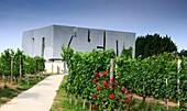Weingut Loisium in Langenlois bei Krems, Wachau, Niederösterreich, Österreich