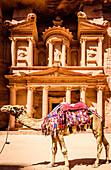 Camel wearing harness by ancient building, Petra, Jordan