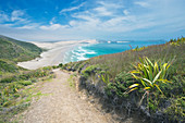 Dirt path on coastal hillside, Te Werahi, Cape Reinga, New Zealand