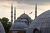 Domes and towers of Blue Mosque, Istanbul, Turkey