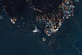 Klippe auf der Insel Pico, Pico, Azoren, Portugal, Atlantik, Europa