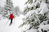 Snowshoe hike in the Upper Harz, Germany