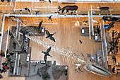 Blick in den Innenraum des Wissenschaftsmuseum MUSE in Trento, Trient, Trentino Alto Adige, Italien, Europa