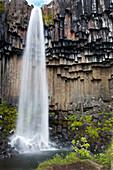 Svartifoss waterfall with basalt columns, Skaftafell National Park, Eastern Iceland, Iceland, Europe