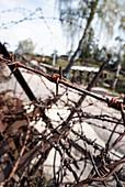 Gedenkstätte Lingekopf, Ehemaliges Schlachtfeld aus dem Ersten Weltkrieg, Orbey, Elsass, Frankreich, Europa