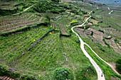 Blick auf die Weinberge von Kayserberg, Haut-Rhin, Grand Est, Elsass, Frankreich, Europa