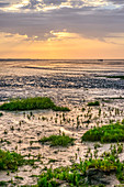 Group of people walks across the open sea at low tide. Wadden Sea, East Frisia, North Sea, Europe. Juist Island
