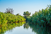 Side arm of the Danube, Sfantu Gheorghe, Danube Delta, Biosphere Reserve, UNESCO World Heritage Site, Dobruja, Romania
