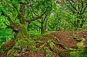 Buchenwald, Kellerwald-Edersee National Park, UNESCO World Heritage old beech forests, Hesse, Germany