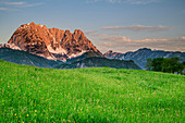 Flower meadow with Kaiser Mountains, Kaiser Mountains, Wilder Kaiser, Tyrol, Austria