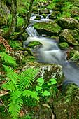 Bach Kleine Ohe, Nationalpark Bayerischer Wald, Bayerischer Wald, Niederbayern, Bayern, Deutschland