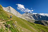 Frau wandert auf Höhenweg, Fußstein und Schrammacher im Hintergrund, Geraer Hütte, Peter-Habeler-Runde, Zillertaler Alpen, Tirol, Österreich