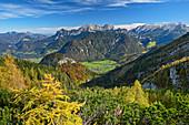 Herbstliche Lärchen mit Tiefblick auf Saalachtal, Berchtesgadener Alpen mit Reiteralpe und Hochkalter im Hintergrund, Ochsenhorn, Loferer Steinberge, Salzburg, Österreich