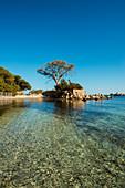 Beach and pine trees, Palombaggia, Porto Vecchio, Corse-du-Sud, Corsica, France