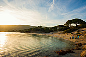 Strand und Pinien, Palombaggia, Porto Vecchio, Département Corse-du-Sud, Korsika, Frankreich