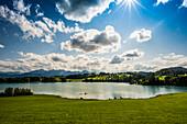 Forggensee, bei Füssen, Ostallgäu, Allgäu, Bayern, Deutschland