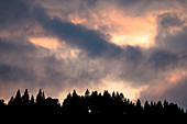 Tree silhouettes of a coniferous forest with dramatic play of colors and cloud formations in the sky during sunset, Germany, Bavaria, Oberstdorf