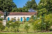France, Hauts de Seine, Rueil Malmaison, Chateau de Malmaison, the New garden roses