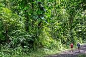 Frankreich, Guadeloupe (Französisch-Westindien), Basse Terre, Capesterre Belle Eau, Weg zum dritten Fall Carbet (20 Meter hoch)