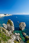 France, Corse-du-Sud, Bonifacio, Bonifacio Straits Nature Reserve, limestone cliffs and the Grain of sand