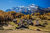France, Savoie, Haute Tarentaise, Le Monal hamlet (1874m) dominated by the Mont Pourri (3779m) and North and South side of Gurraz Glacier, Savinaz and Martin Glaciers in the Parc National de la Vanoise