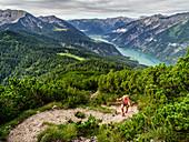 Trailläuferin im Aufstieg zwischen Latschen hoch über dem Achensee, Vorderunnütz, Tirol, Österreich