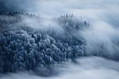 Leicht verschneite Bäume zwischen umherziehenden Wolken, Inntal, Tirol, Österreich
