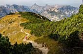 Trailrunner runs in a grandiose Karwendel panorama to the summit of Bärenkopf, Achensee, Tyrol, Austria