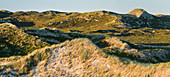 Dune landscape in the evening sun in Nordsylt, Sylt, Schleswig-Holstein, Germany