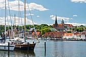 Yachthafen am Ostufer von Flensburg, Schleswig-Holstein, Deutschland