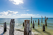 Pelicans on weathered wooden posts in the Gulf of Mexico, Fort Myers Beach, Florida, USA