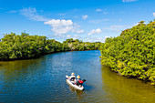 A boat tour with Huind through the mangroves in a national park, Fort Myers Beach, Florida, USA