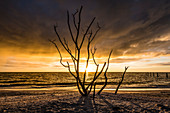 Silhouette of a bare tree on the beach from the Gulf of Mexico at sunset, Fort Myers Beach, Florida, USA
