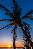A palm tree on the beach from the Gulf of Mexico at sunset, Fort Myers Beach, Florida, USA