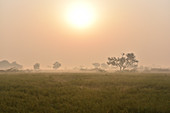 2017, Vrindavan, Uttar Pradesh, India, sunrise over the field